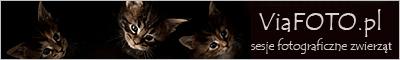 Sesje fotograficzne zwierząt